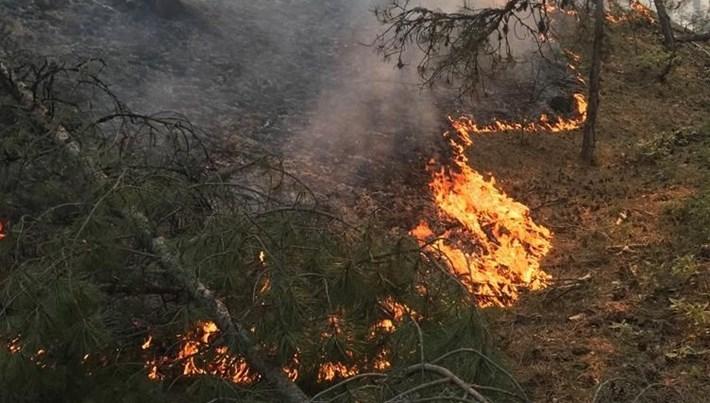 Muğla ve Aydın'da 284 yangında 950 hektar alan tahrip oldu