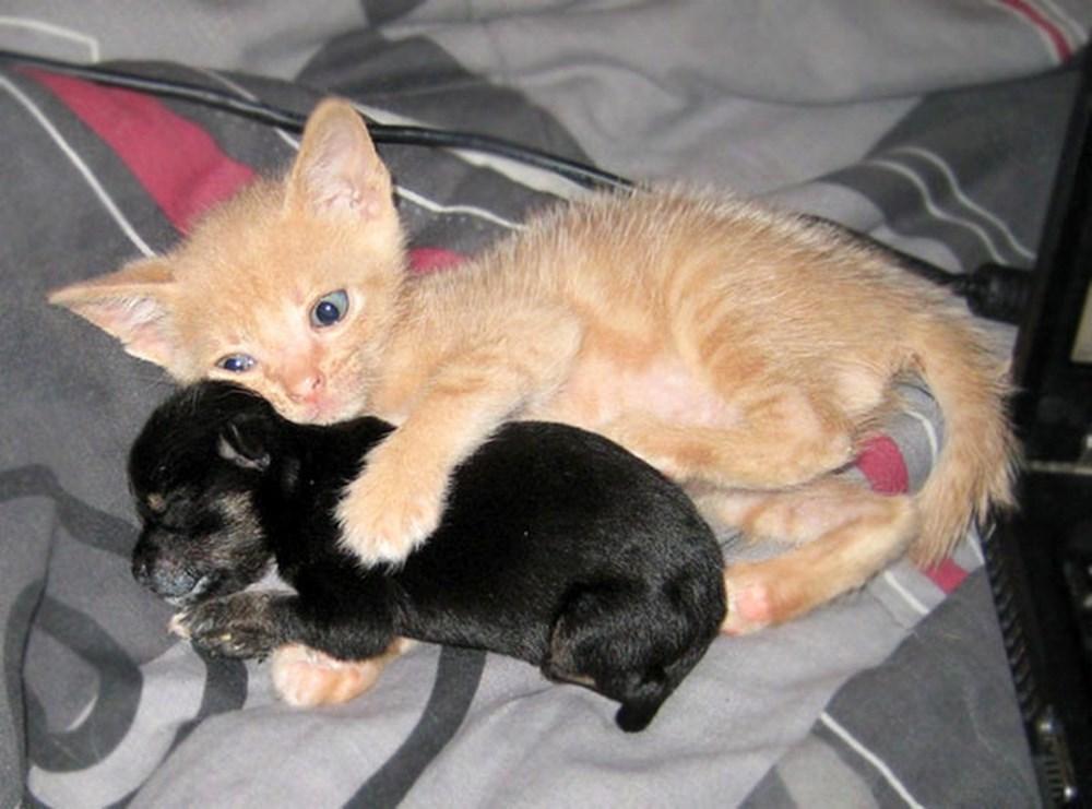 Картинки собаки с котятами с надписями