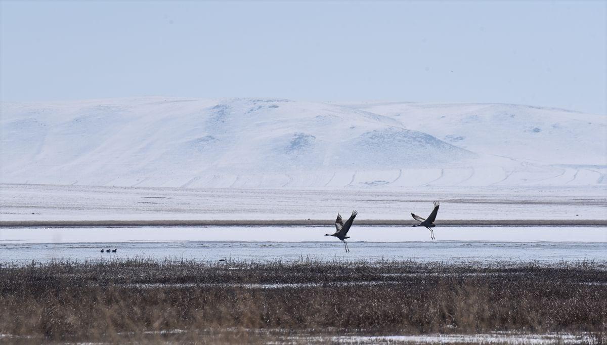 Kuş cenneti Kuyucuk Gölü, ilkbaharda göçmen misafirleriyle şenlendi