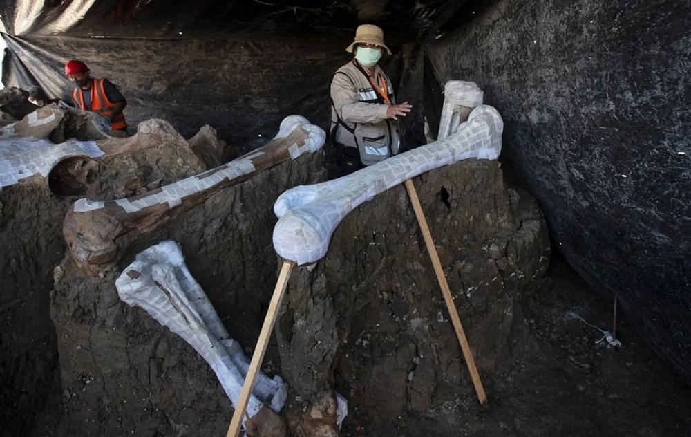Meksika'daki sit alanında bulunan mamut fosillerinin sayısı 200'e yükseldi - 4