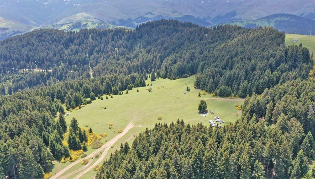 Alpler'i aratmıyor: Giresun'un 'oksijen deposu' Kümbet Yaylası