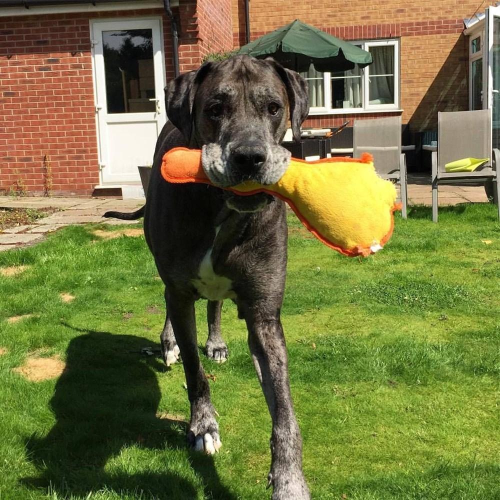 Dünyanın en uzun köpeği Freddy hayatını kaybetti - 22