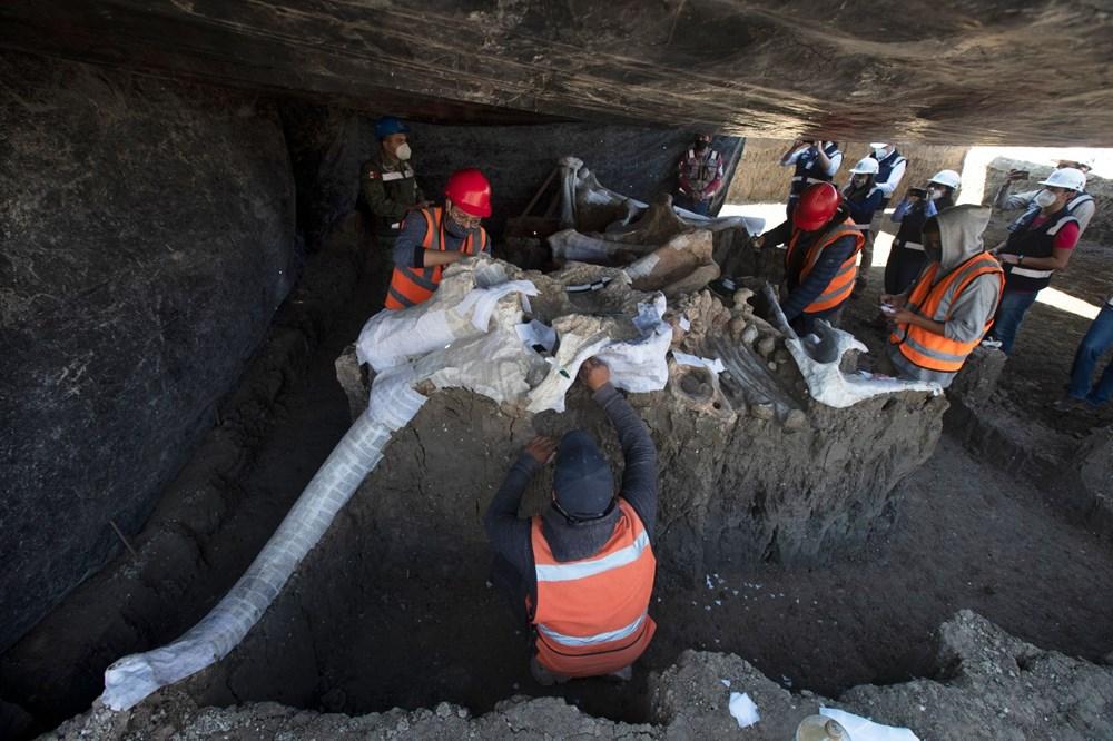 Meksika'daki sit alanında bulunan mamut fosillerinin sayısı 200'e yükseldi - 1