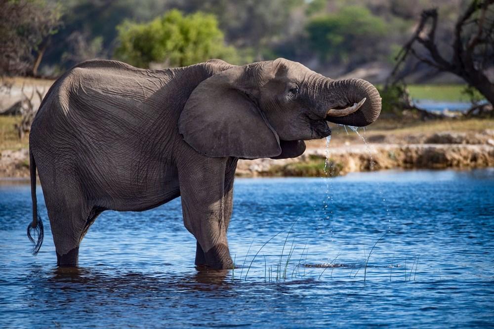 Vahşi yaşamın yüzde 70'i son 50 yılda yok oldu: Milyonlarca yıldır böylesi görülmedi - 2