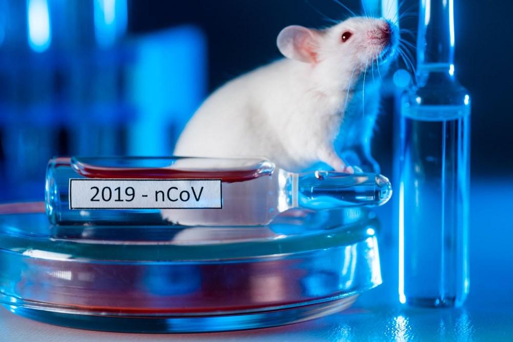 Corona virüse karşı 10 kat koruma sağlayabilen nano partikül aşı geliştirildi - 2