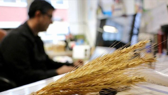 8 bin yıllık tohumlar tarımsal geçmişi gün yüzüne çıkardı