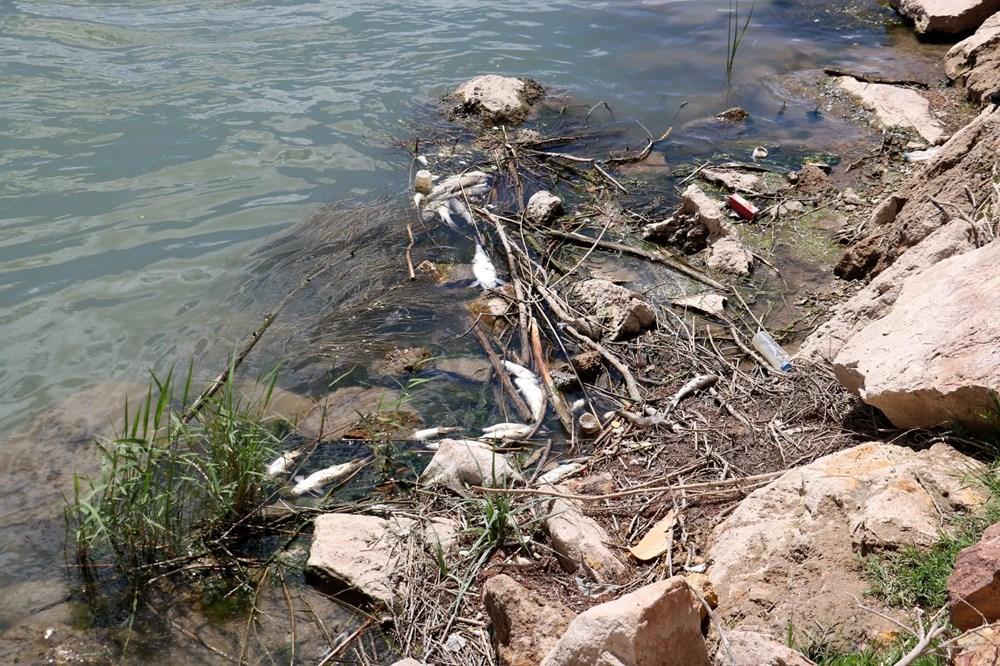 Türkiye'nin en uzun nehri Kızılırmak'ta toplu balık ölümleri - 9