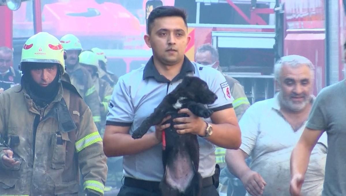 İkitelli'de anne köpek ve yavrusu alev kapanından kurtarıldı