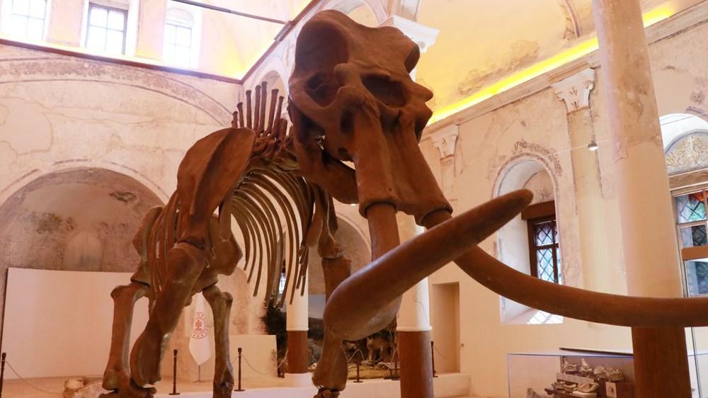 İki milyon yıllık fosiller Burdur Doğa Tarihi Müzesi'nde sergileniyor - 2