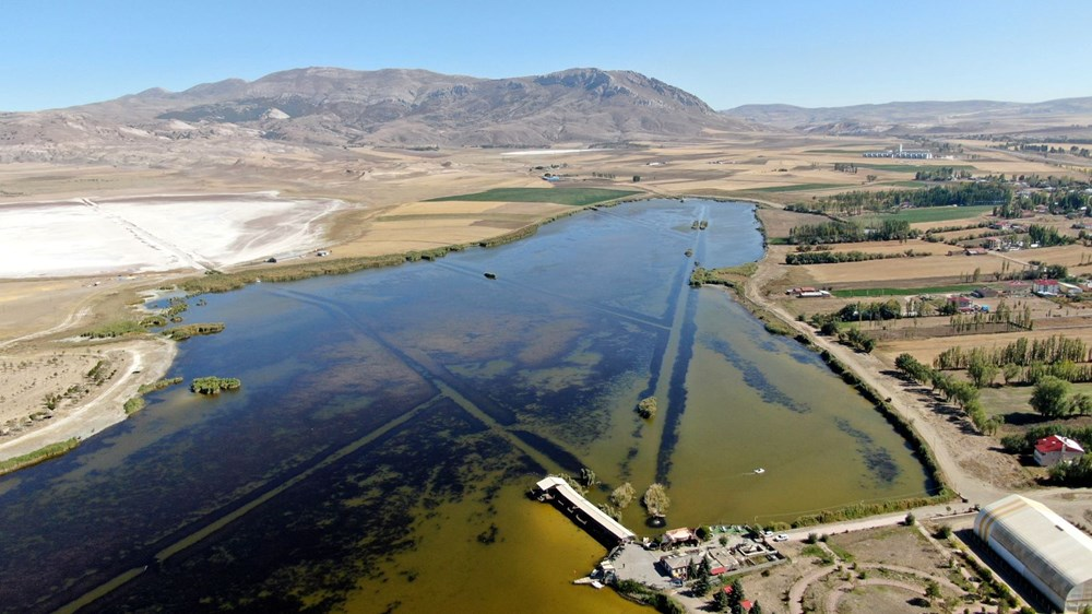 Suyun rengi sarıya döndü, onlarca balık öldü - 3