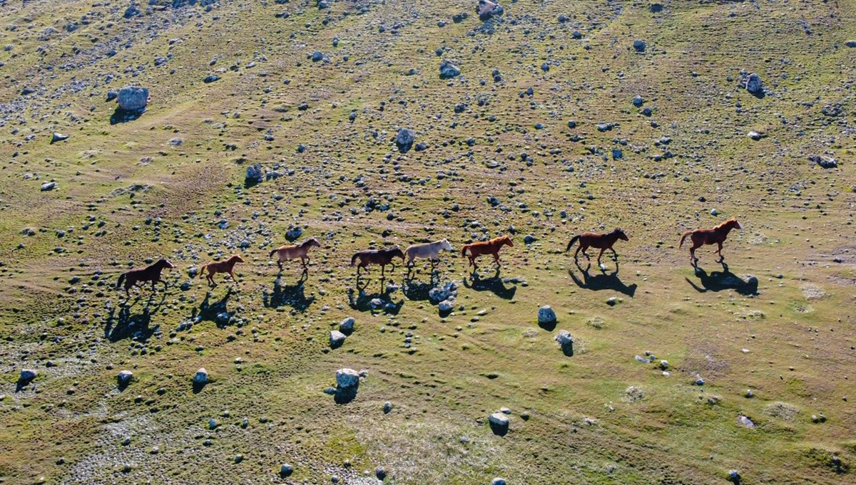 The horses descending from the snowy mountains in Tunceli created a visual feast