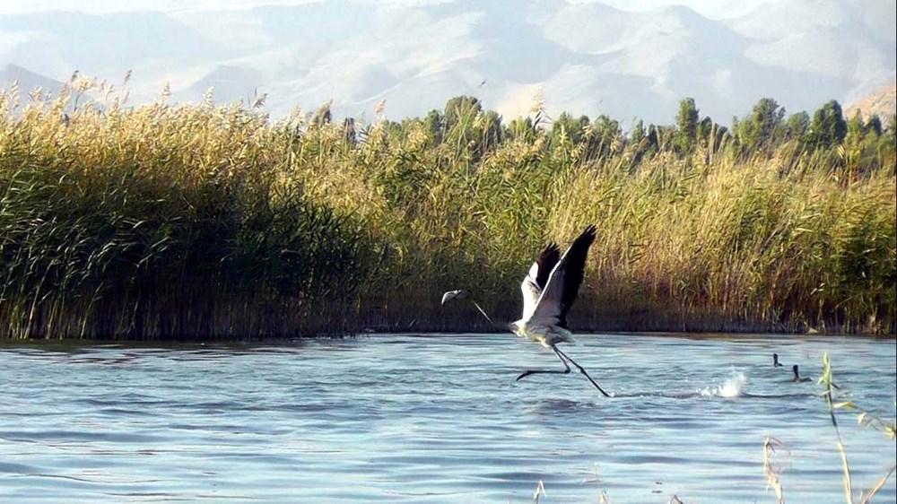 Van Gölü'nde flamingo şöleni - 11