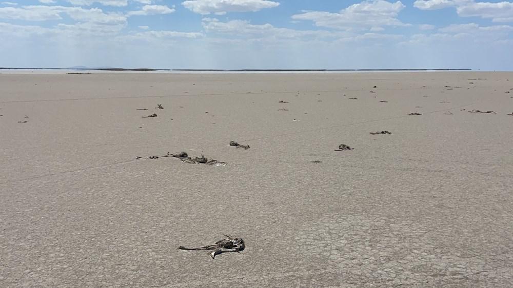 Tuz Gölü'nde toplu flamingo ölümleri: Soruşturma başlatıldı - 2