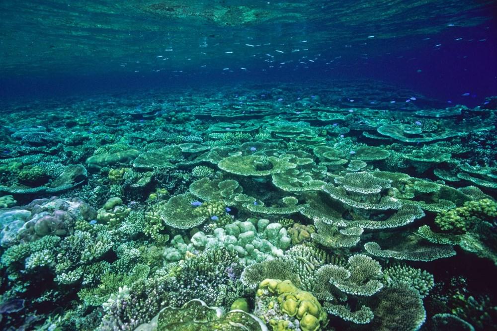 İklim değişikliği, Büyük Set Resifi'ndeki mercanların yarısını yok etti - 4