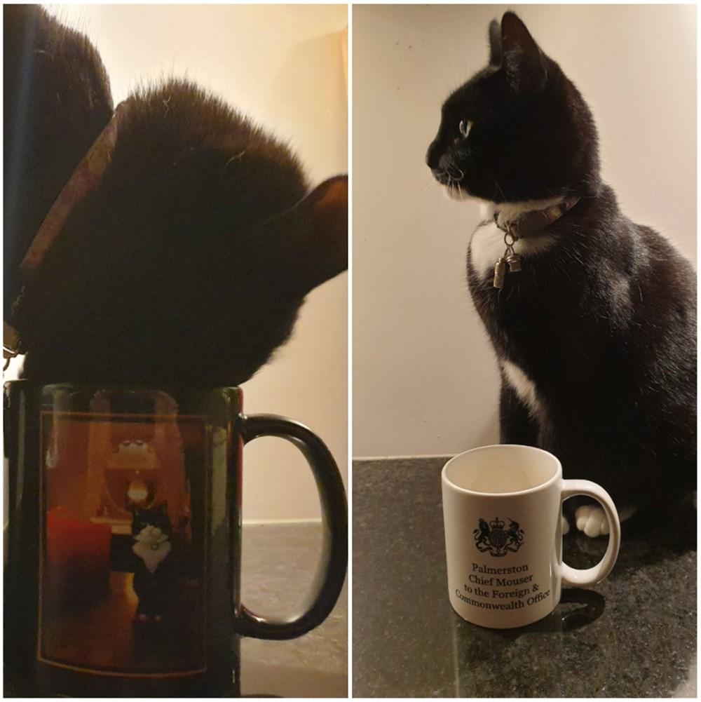 Diplomat kedi Palmerston İngiltere Dışişleri Bakanlığı'ndan emekli oldu - 8