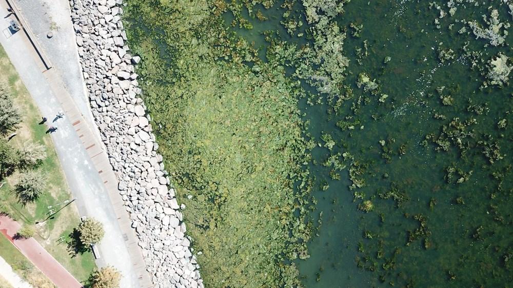 İzmir'de denizin rengi yeşile döndü - 6