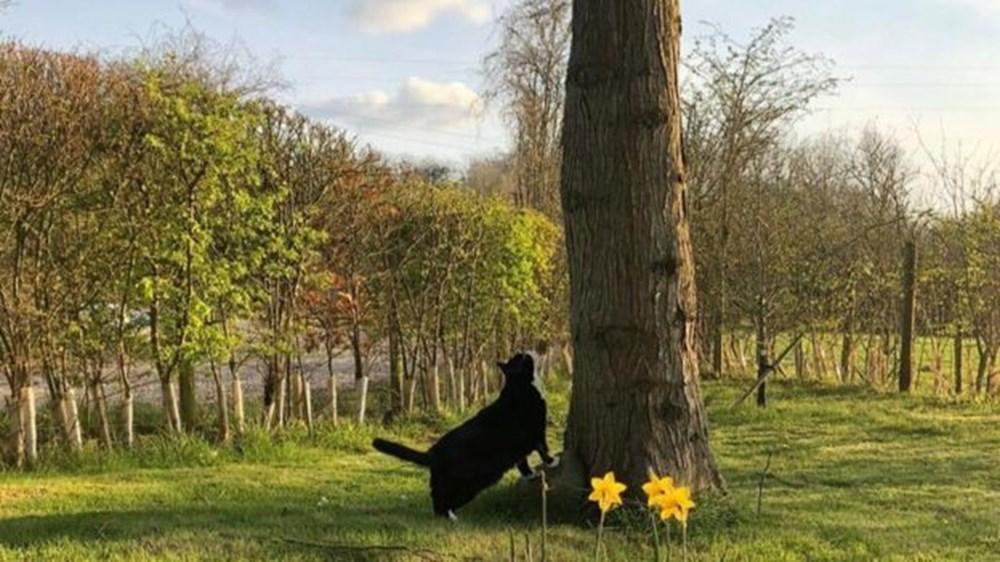Diplomat kedi Palmerston İngiltere Dışişleri Bakanlığı'ndan emekli oldu - 7