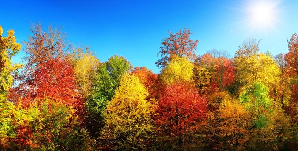 Araştırma: Her üç ağaçtan biri yok olma tehlikesiyle karşı karşıya, hangi ağaçlar tehlikede? - 4