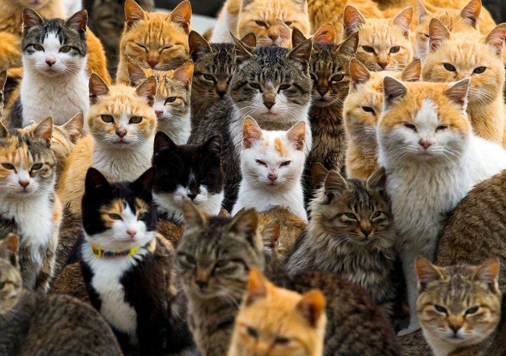 Japonya'daki kedi adası: Aoshima - 10