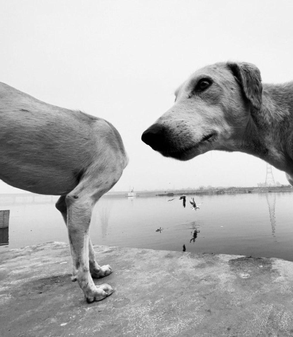 2020 Mars Petcare Komik Hayvan Fotoğrafları Yarışması'nın finalistleri - 5