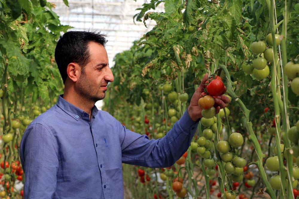 Hava sıcaklığının eksi 40'a kadar düştüğü Çaldıran'da, serada domates üretimi - 4