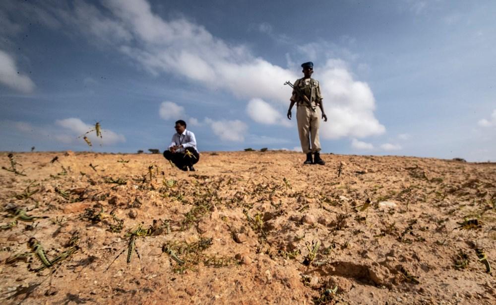 Somali, çekirge istilası nedeniyle OHAL ilan etti - 11