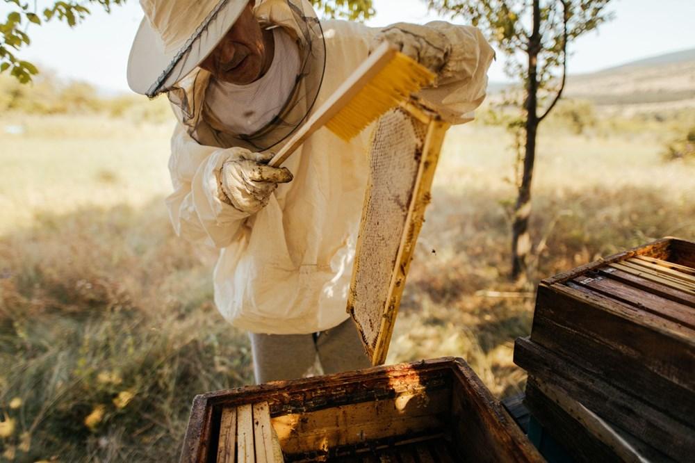 <p>Zagreb'de bulunan Adli Muayene, Araştırma ve Uzmanlık Merkezi, laboratuvar analizi yoluyla arılarının ölümün kesin nedenini belirlemek için arı, bal ve tarla örnekleri topladığını bildirdi.</p> <p>Öte yandan, Madmurje yetkileri arıcıların zararını karşılamak ve kalan arıları korumak için azami destek sağlayacaklarını açıkladı. Bu kapsamda arıcılara hasarlı kovan başına 200 euro verileceği açıklandı.</p>