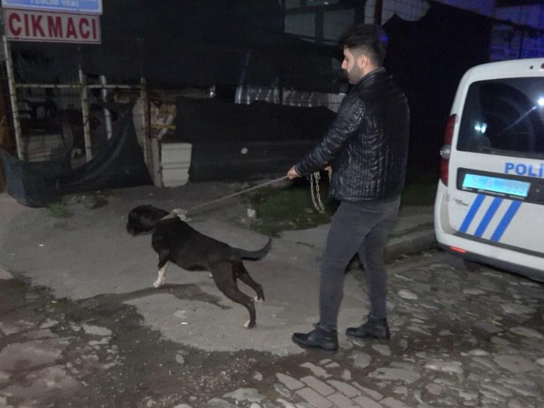 Pitbullun yakaladığı, esnafın dövdüğü taciz şüphelisi tutuklandı
