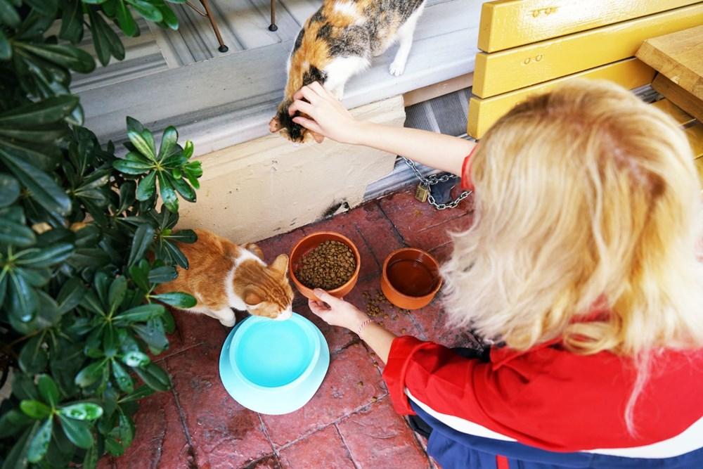"""Bilim insanları """"açık ilişki""""den """"eş bağımlılığa"""" kedilerle insanlar arasındaki 5 ilişki türünü ortaya koydu: Sizin kedilerle aranızda nasıl bir bağ var? - 5"""