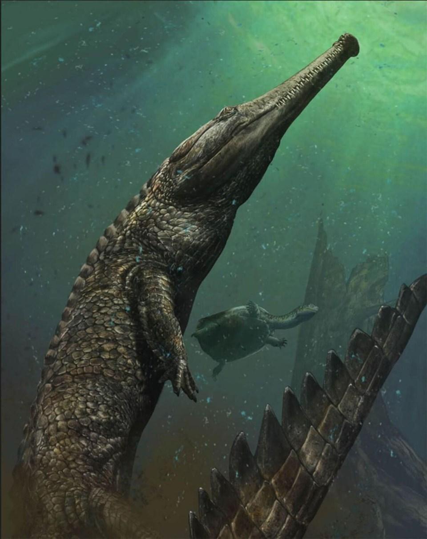 Machimosaurus'un boyu yaklaşık on metreye çıkabiliyordu.