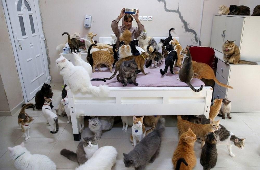 Evinde 480 kedi ve 12 köpeğe bakıyor - 2
