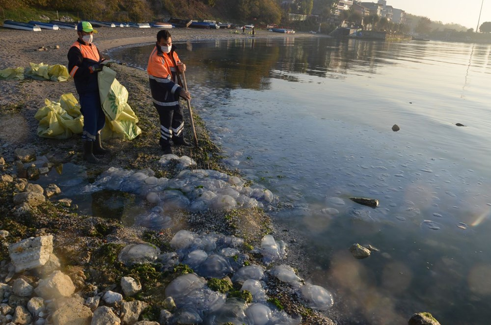 İstanbul'da korkutan dev denizanaları: Her biri en az bir kilo ağırlığında - 18