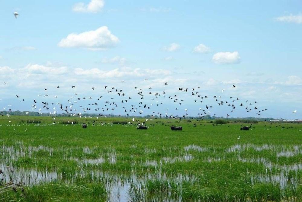 Kızılırmak Deltası Kuş Cenneti ilkbaharda bir başka güzel | NTV