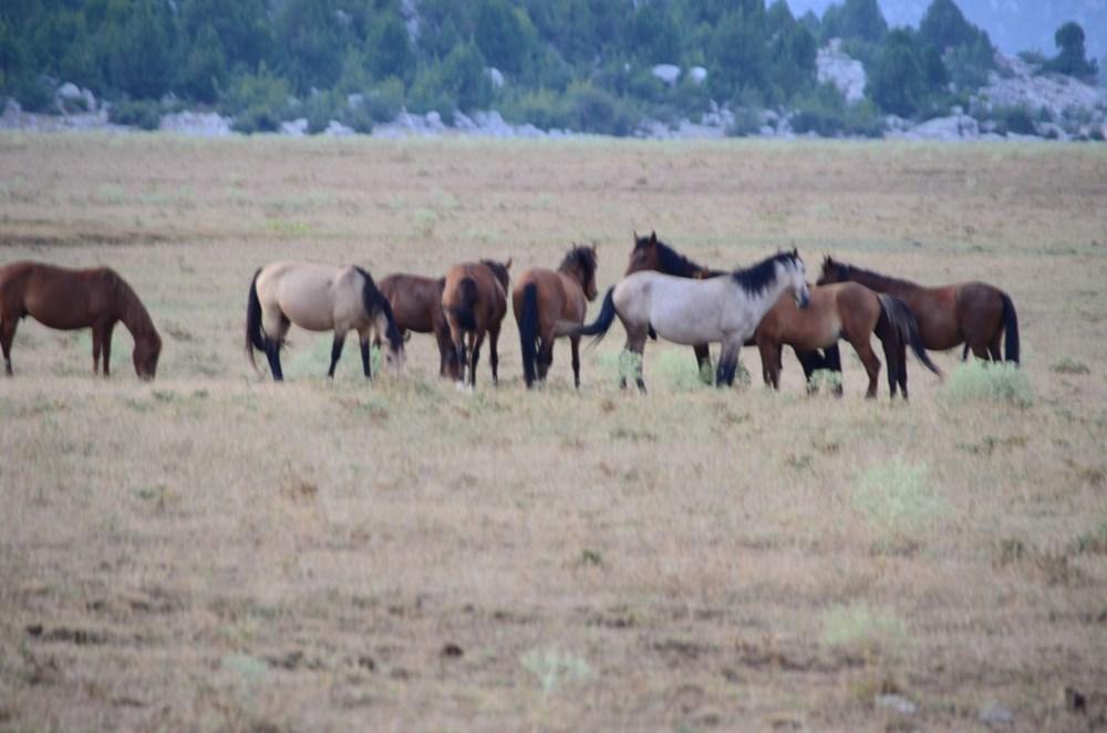 Soyları Osmanlı süvari birliğine dayanıyor! Torosların vahşi güzelliği 'Yılkı atları' - 15