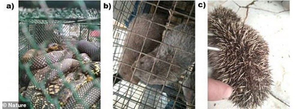 Research unpublished for 1 year: Animals known to carry Covid-19 in Wuhan have been sold for years - 10