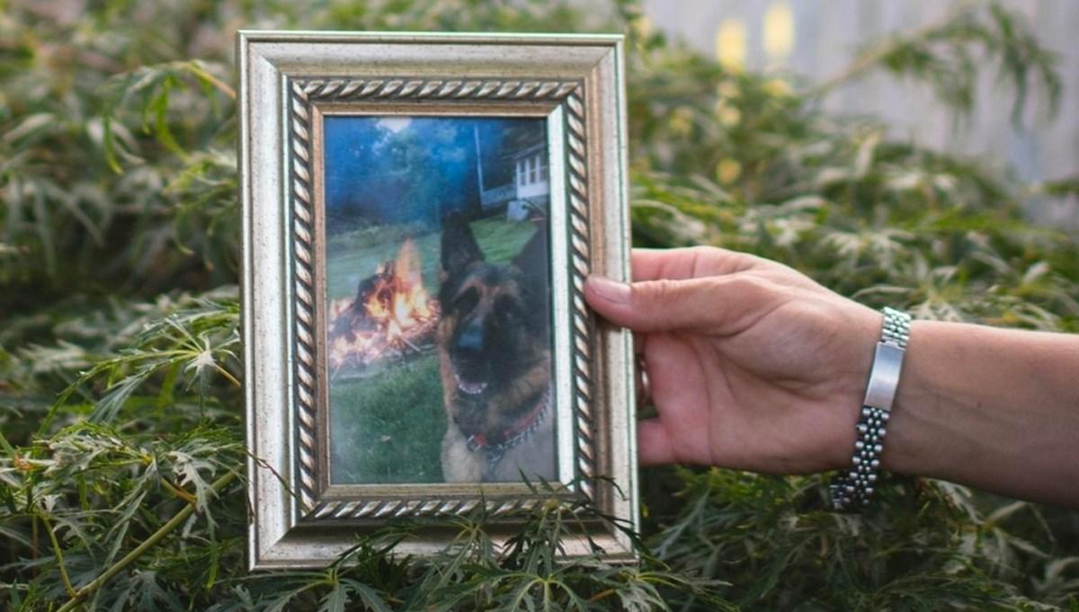 ABD'de Covid-19 testi pozitif çıkan köpek hayatını kaybetti