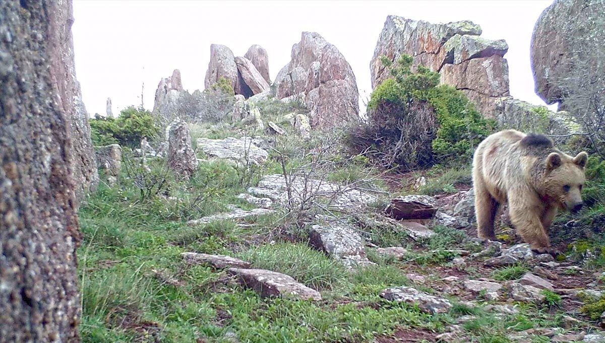 Sivas's wildlife viewed with photo trap