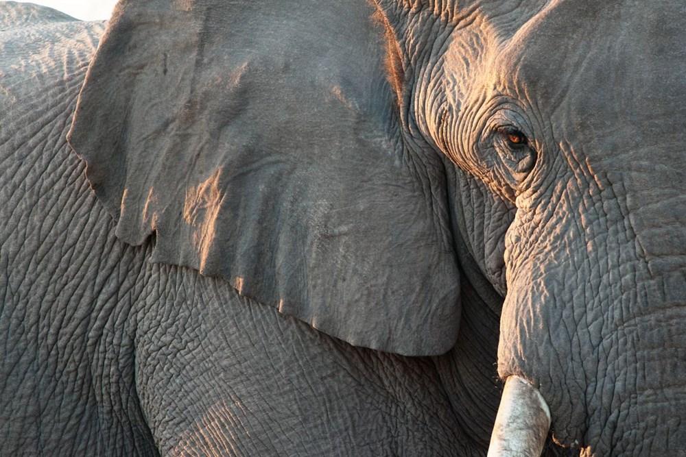 Araştırma: İklim değişikliği nedeniyle hayvanların şekli değişebilir - 1