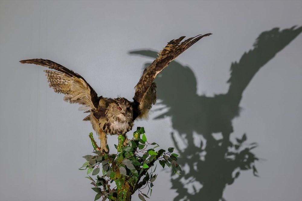 Van'da yaban hayvanları tahnit sanatıyla müzede tanıtılacak - 25
