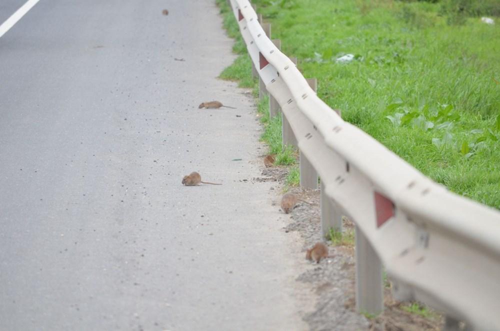 İstanbul yolunu fareler bastı - 7