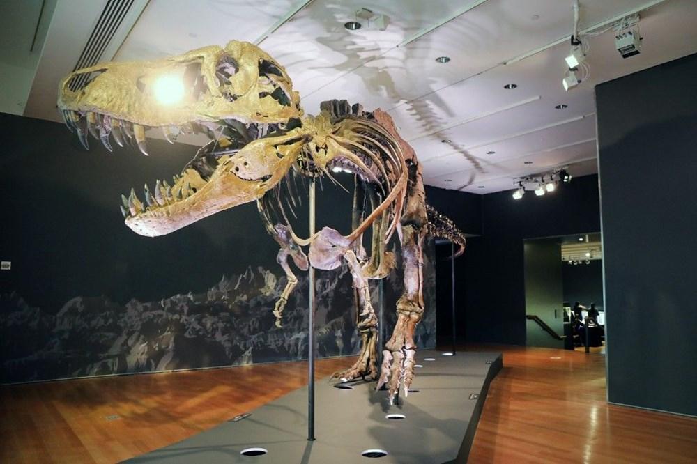 67 milyon yaşındaki dinozor iskeleti açık artırmayla satılacak - 4