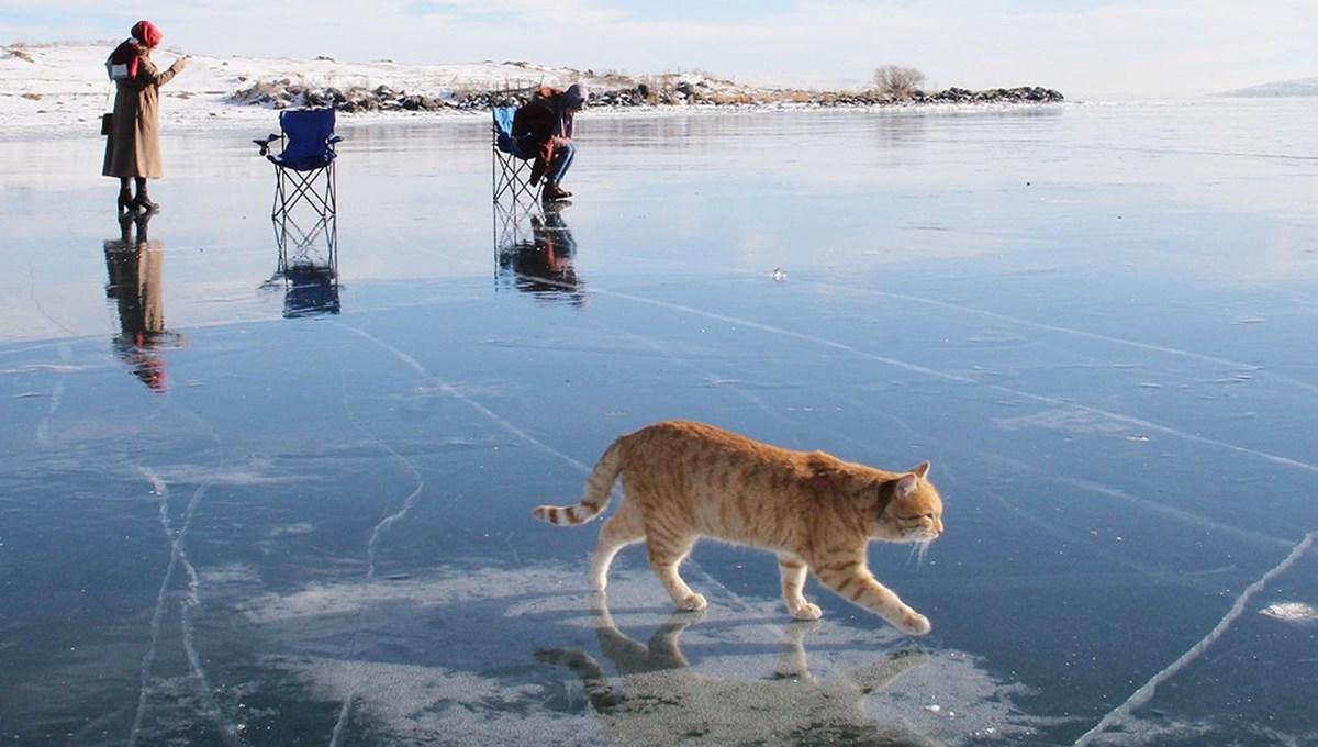 Buz tutan Çıldır Gölü'nde renkli görüntüler