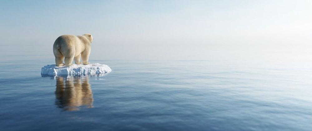 Danimarkalı yetkililerden tepki çeken karar: Kutup ayısını vurabiliriz - 7