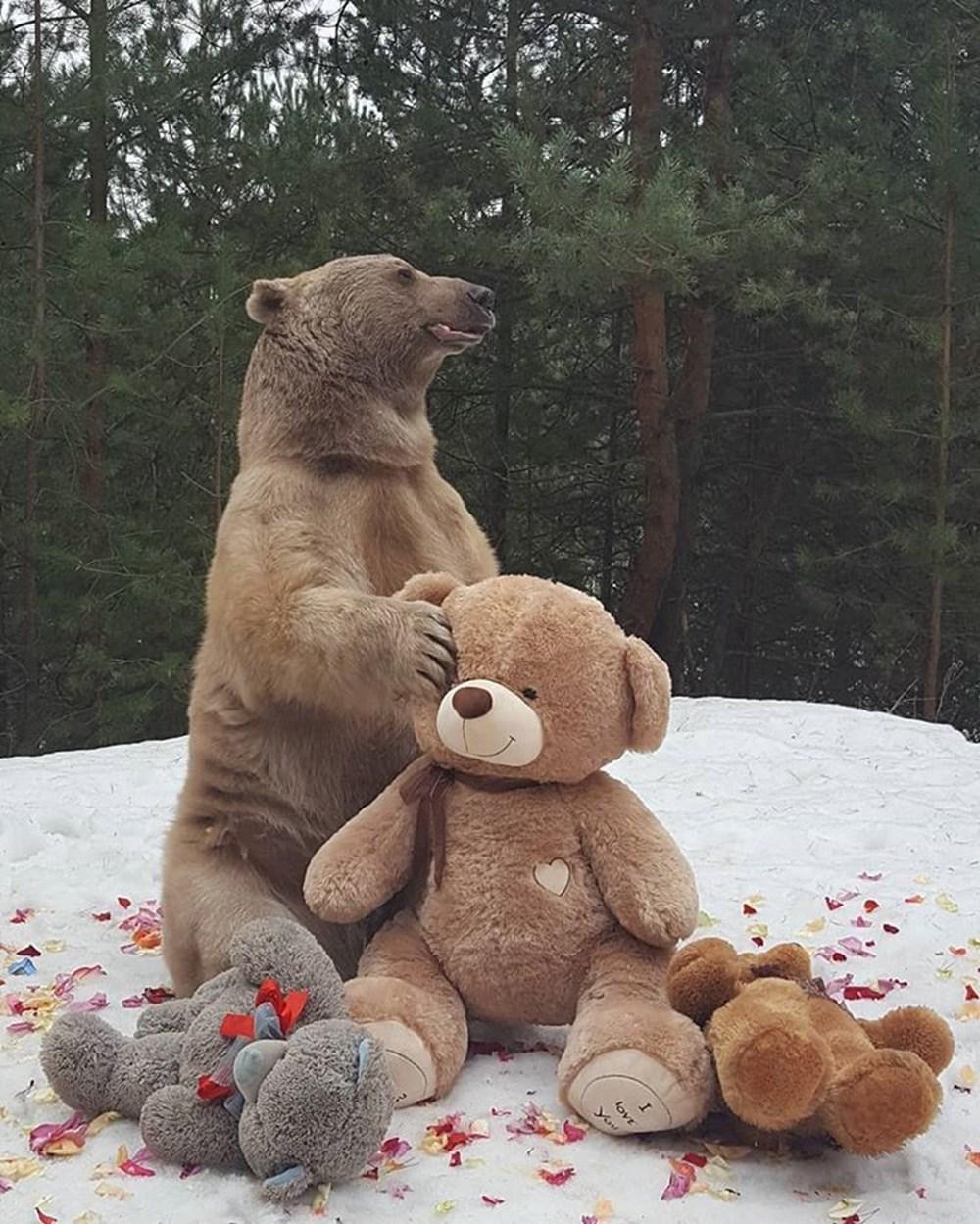Милые медвежата картинки настоящие