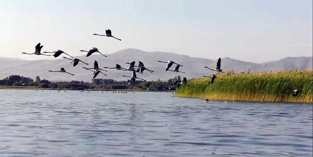 Van Gölü'nde flamingo şöleni - 13