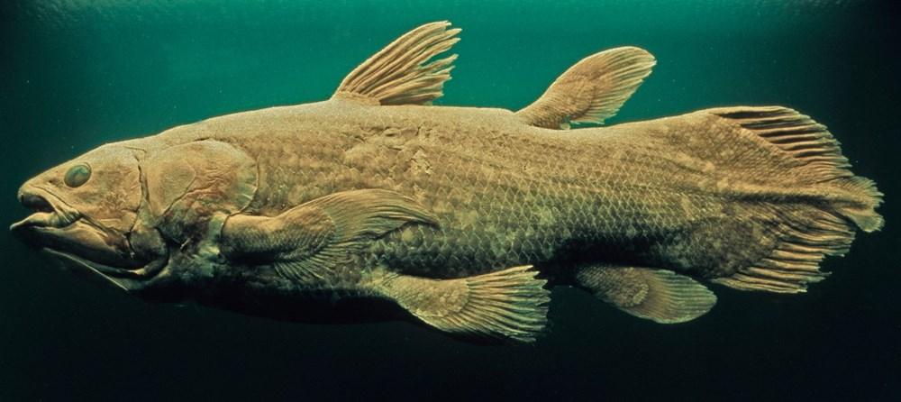 Yeni keşif: 'Yaşayan fosil' balık 100 yıl yaşıyor, hamileliği 5 yıl sürüyor - 8