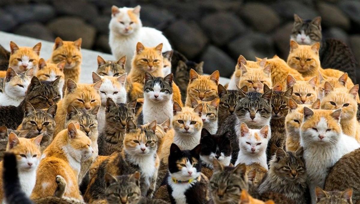 Cat island in Japan: Aoshima