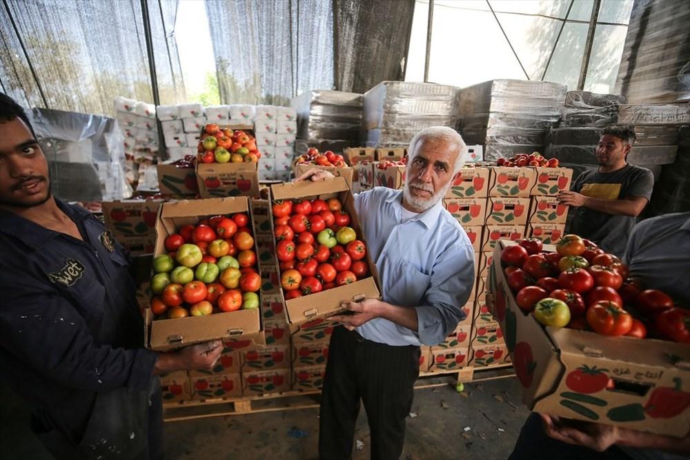İsrail'in kararına tepki: Domates sapını tehdit gördüler - 10