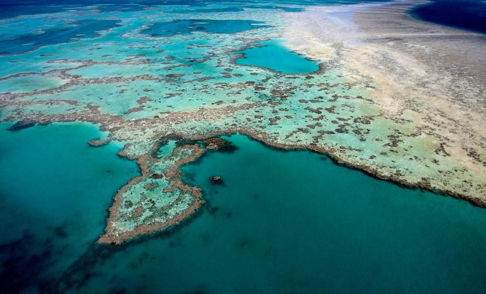 İklim değişikliği, Büyük Set Resifi'ndeki mercanların yarısını yok etti - 9