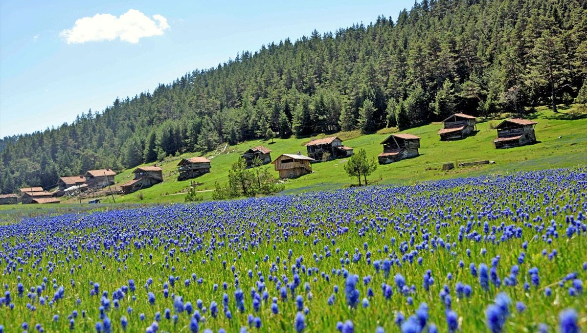 Kastamonu plateaus, displaying all the beauties of spring, are waiting for their visitors.
